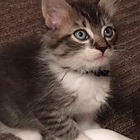 Adopt A Pet :: Tio L - North Highlands, CA