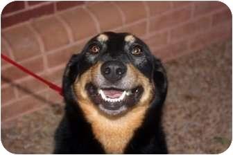 Doberman Pinscher/Shepherd (Unknown Type) Mix Dog for adoption in Smyrna, Georgia - Olivia