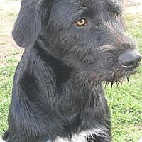 Adopt A Pet :: Stash #5221 - Jerome, ID