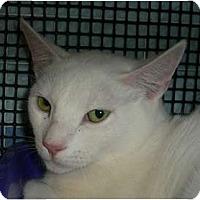 Adopt A Pet :: Putter - lake elsinore, CA
