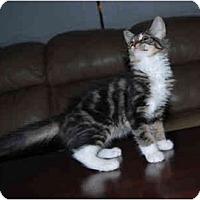 Adopt A Pet :: Peaches - Modesto, CA