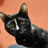 Adopt A Pet :: Fudgesicle 13140 - Atlanta, GA