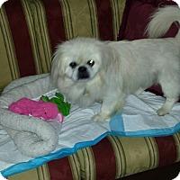 Adopt A Pet :: Bentley - Richmond, VA