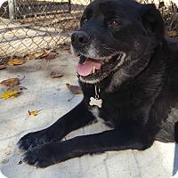 Adopt A Pet :: Donnie - Fennville, MI
