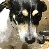 Adopt A Pet :: Tinker - Southington, CT