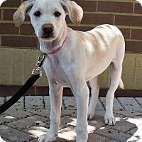 Adopt A Pet :: The 100 litter - Clarke - Charlotte, NC