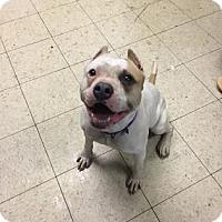 Adopt A Pet :: Gemma - Cleveland, OH