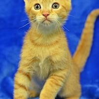 Adopt A Pet :: Tigger Tabby171152 - Atlanta, GA