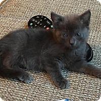 Adopt A Pet :: Charli - Greenville, NC
