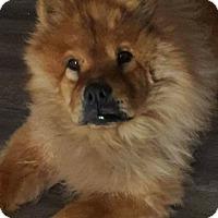Adopt A Pet :: Vandal - Sacramento, CA