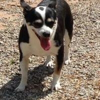 Adopt A Pet :: Dolly - Shelby, NC