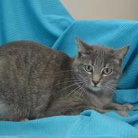 Adopt A Pet :: Linda - New Iberia, LA