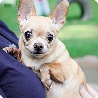 Adopt A Pet :: Sasha - Virginia Beach, VA
