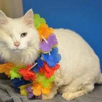 Adopt A Pet :: Jolly - Redmond, OR