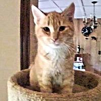 Adopt A Pet :: Marcus - Princeton, NJ