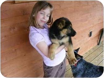 German Shepherd Dog Puppy for adoption in Elmwood, Tennessee - Ben