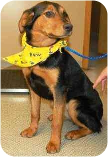Shepherd (Unknown Type)/Terrier (Unknown Type, Medium) Mix Dog for adoption in Osseo, Minnesota - Sassy
