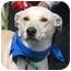 Photo 1 - Labrador Retriever/Shepherd (Unknown Type) Mix Dog for adoption in Poway, California - Skeeter