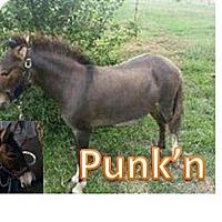 Adopt A Pet :: Punk'n - Malvern, IA