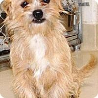 Adopt A Pet :: Riley - San Angelo, TX