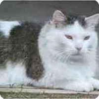 Adopt A Pet :: Genghis Khat - Lunenburg, MA