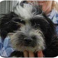 Adopt A Pet :: Tucker - Antioch, IL