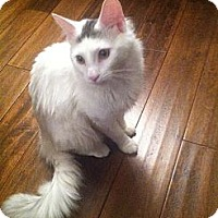Adopt A Pet :: Freddy (Adoption Pending) - Arlington, VA