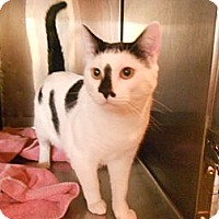 Adopt A Pet :: Mr. Moo - Maywood, NJ