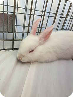 Dwarf Mix for adoption in San Clemente, California - AGATE