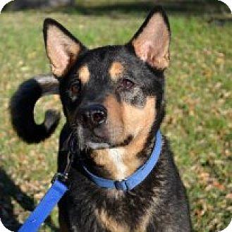 Terrier (Unknown Type, Medium) Mix Dog for adoption in Cedar Creek, Texas - Jonah