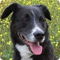 Adopt A Pet :: BODHI (Courtesy List) - San Pedro, CA