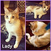 Adopt A Pet :: Lady - North Richland Hills, TX