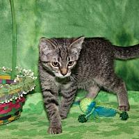 Adopt A Pet :: Lillian (Updated Photos) - Marietta, OH