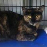 Adopt A Pet :: Secret - Chambersburg, PA