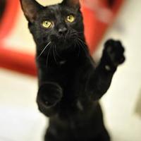 Adopt A Pet :: Queen - Encinitas, CA