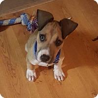 Adopt A Pet :: Tiger - Columbus, OH