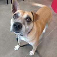 Adopt A Pet :: Brownie - Monticello, IA