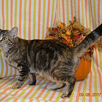 Adopt A Pet :: Veronica - Kankakee, IL