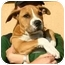 Photo 2 - American Pit Bull Terrier Mix Puppy for adoption in Berkeley, California - Bilito