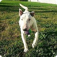 Adopt A Pet :: Eli - Hilliard, OH