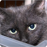 Adopt A Pet :: Smokey - Loveland, CO