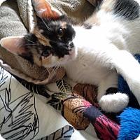 Adopt A Pet :: PENNY - 2014 - Hamilton, NJ