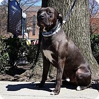 Adopt A Pet :: Deuce - Mount Juliet, TN