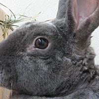 Adopt A Pet :: Minkha - Newport, DE