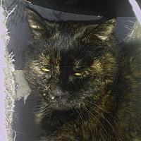 Adopt A Pet :: Tru - Palo Cedro, CA
