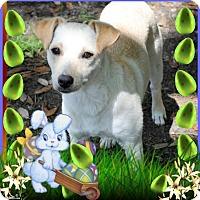 Adopt A Pet :: Sunni - Crowley, LA