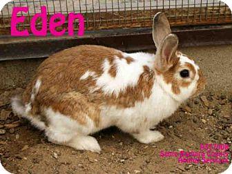 Rhinelander for adoption in Santa Maria, California - EDEN
