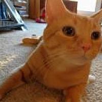 Adopt A Pet :: Meska - Duluth, GA