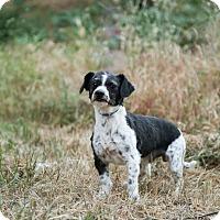 Adopt A Pet :: Mr. Freckles - Auburn, CA
