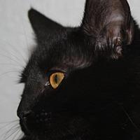 Adopt A Pet :: Amber - GO - Burlington, WA